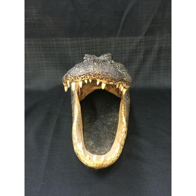 Vintage Taxidermy Alligator Head - Image 3 of 5