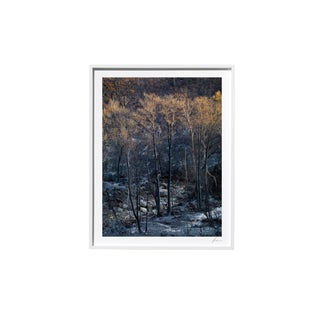 "Timothy Hogan ""Twins"" Original Framed Color Landscape Photograph, 2017 For Sale"