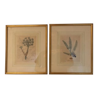 Framed Botanical Engravings - a Pair
