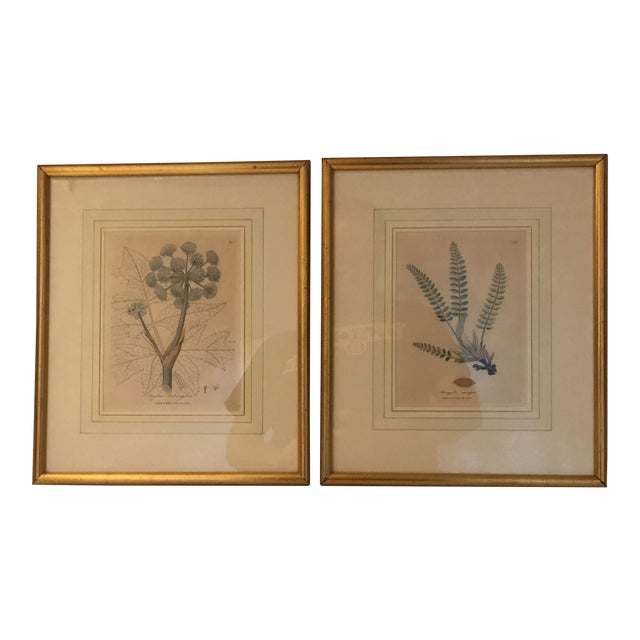 Framed Botanical Engravings - a Pair For Sale