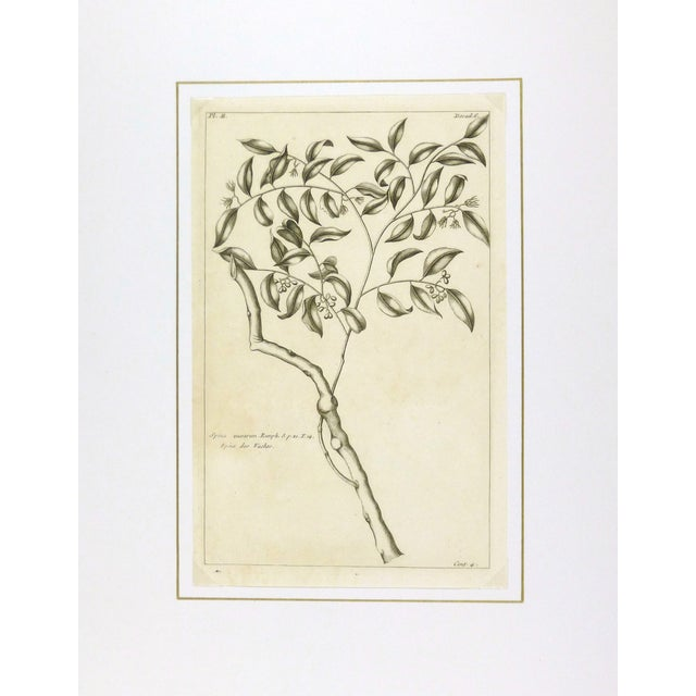 French Country Antique Botanical Engraving, 1773 For Sale - Image 3 of 3