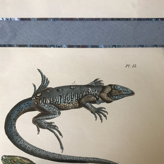Custom Framed 1832 French Lizard Print - Image 7 of 8