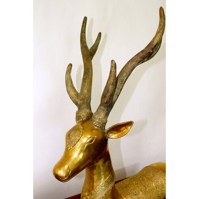 Metal Large Vintage Recumbent Brass Stags / Deer - a Pair For Sale - Image 7 of 9