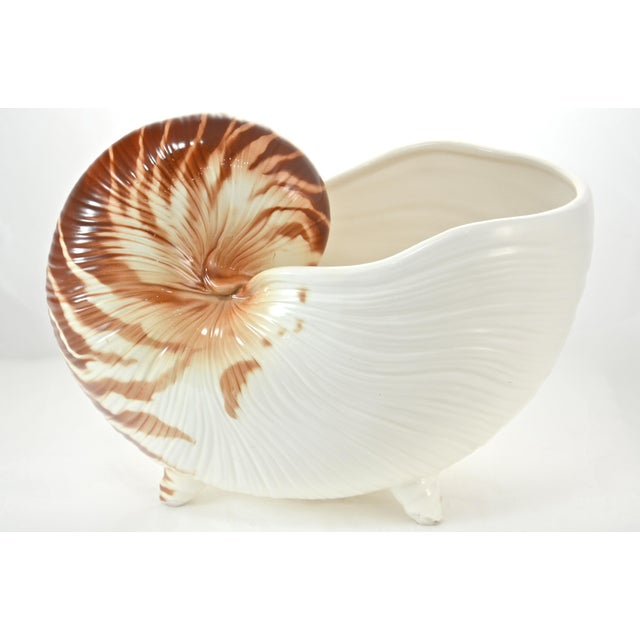 White Nautilus Shell Bowl For Sale - Image 8 of 8