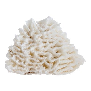 Natural White Lettuce Coral For Sale