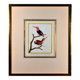 "Francois Martinet Bird Engraving Depicting a ""Martin Pecheur Madagascar"" and a ""Martin Pecheur De Pondecherry"" For Sale"
