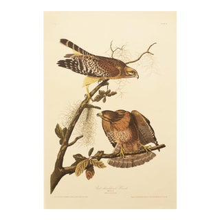 1990s Red-Shouldered Hawk by Audubon, Large Cottage Style Print For Sale