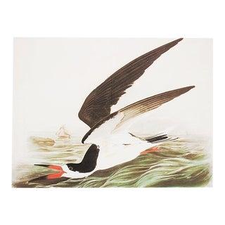 "1966 Audubon, Cottage Style ""Black Skimmer"" Lithograph For Sale"