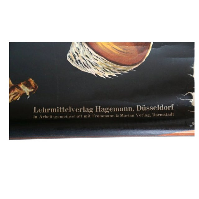 Anatomy of a Bumblebee German Wall Chart - Image 7 of 7