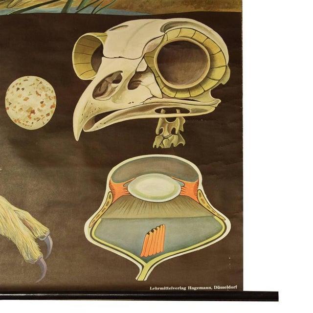 German Educational Poster of Birds of Prey - Image 3 of 4