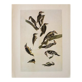 1966 Vintage Cottage Print of Woodpeckers of America by Audubon For Sale