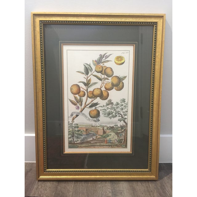 """A pair of antique reproduction prints purchased and framed by J. Pocker & Son of New York, NY. Each piece measures 26""""..."""