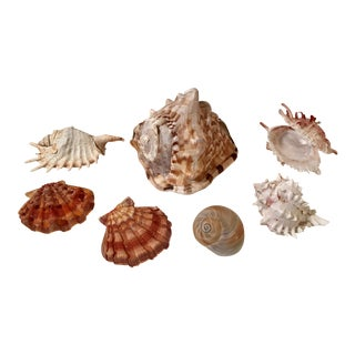 Natural Sea Shell Collection - Set of 7
