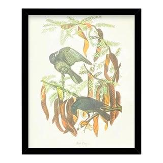 Custom Black Wood Frame of Authentic Vintage John James Audubon Fish Crow Bird & Botanical Print For Sale
