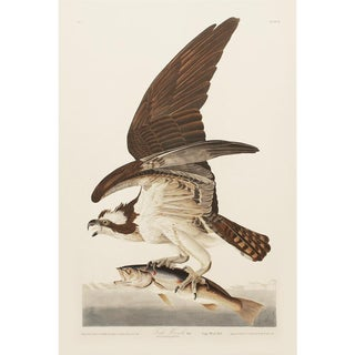 1990s Fish Hawk by Audubon, Large American Classical Print For Sale