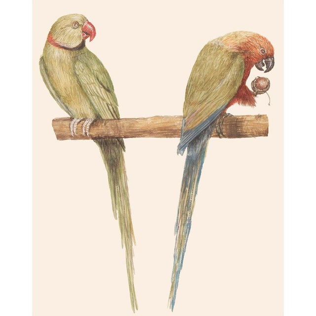 1590s Large Print of Alexandrine Parakeet & Red-Breasted Parakeet by Anselmus De Boodt For Sale In Dallas - Image 6 of 9
