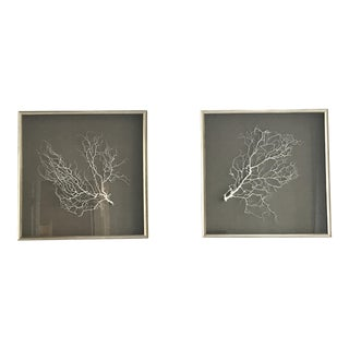 Wjc Designs Framed Sea Fan Coral on Belgian Linen For Sale