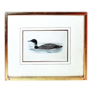 "Certified Original and Framed ""Great Northern Diver"" Illustration of a Duck Engraved by Morris Circa. 1838 For Sale"