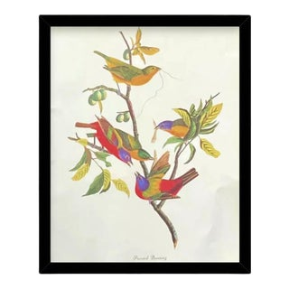 Custom Black Wood Frame of Authentic Vintage John James Audubon Painted Bunting Bird & Botanical Print For Sale