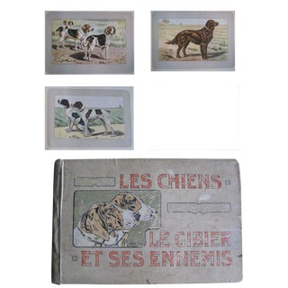Moving Sale - 1907 French Book Filled With 180 Photogravure Prints of Dogs and Other Animals