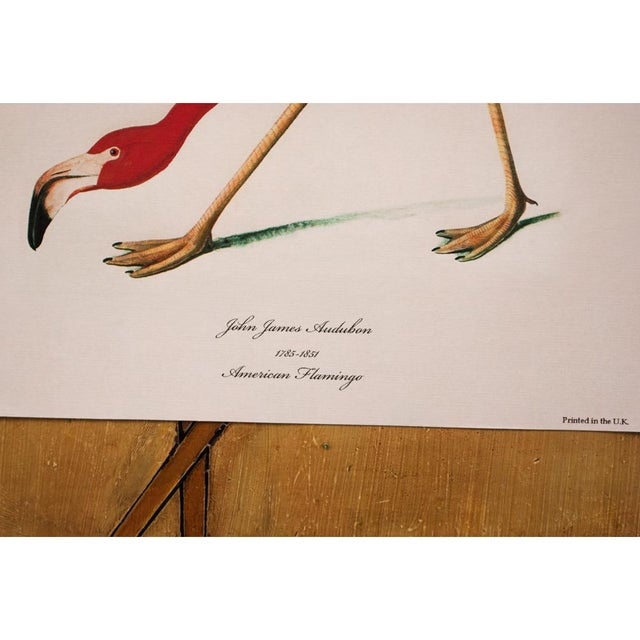 American Flamingo by John James Audubon, Large Reproduction Print For Sale In Dallas - Image 6 of 9