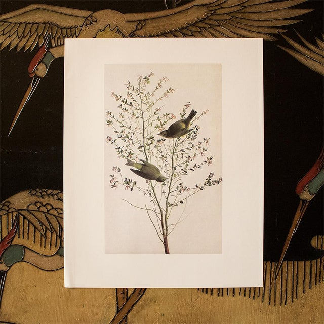 American 1966 Cottage Print of Orange-Crowned Warbler by Audubon For Sale - Image 3 of 8