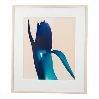 """Blue Tulip"" Photogram by Millie Falcaro For Sale"