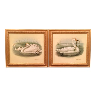Chelsea House Swan Oil Paintings in the Manner of Samuel Giles - a Pair For Sale