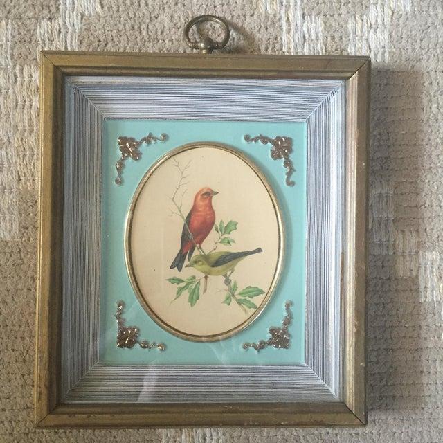 1958 Framed Bird Print - Image 2 of 9
