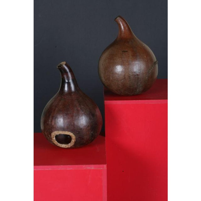 A pair of large dried gourds, originally used for containing liquids. The high value the original owners placed on these...