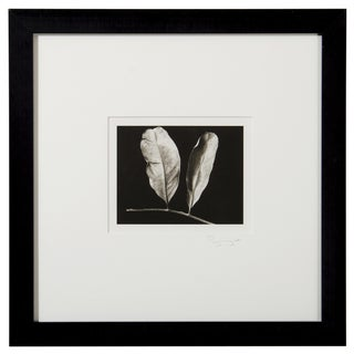 Platinum Print - Two Leaves by Ryuijie For Sale