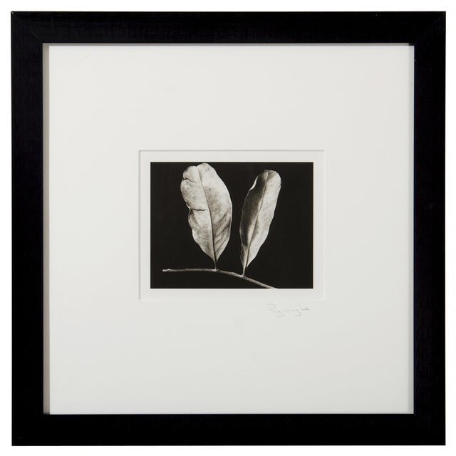 Platinum Print - Two Leaves by Ryuijie - Image 1 of 2