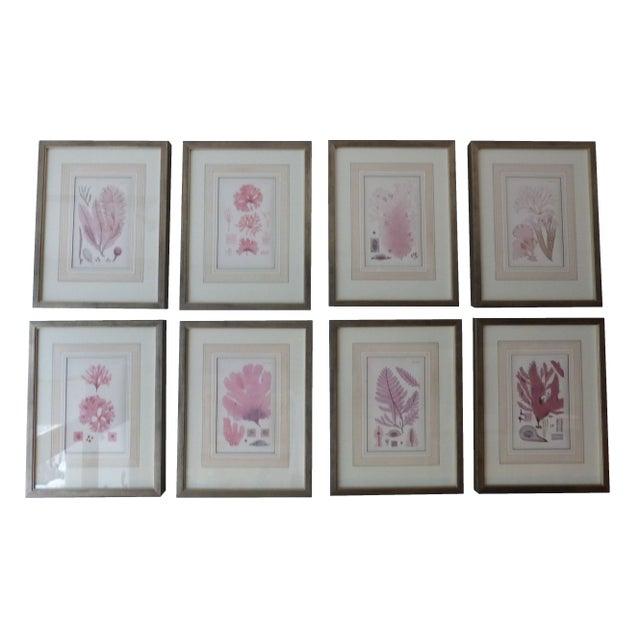 Antique Seaweed Engravings - Set of 8 - Image 1 of 8