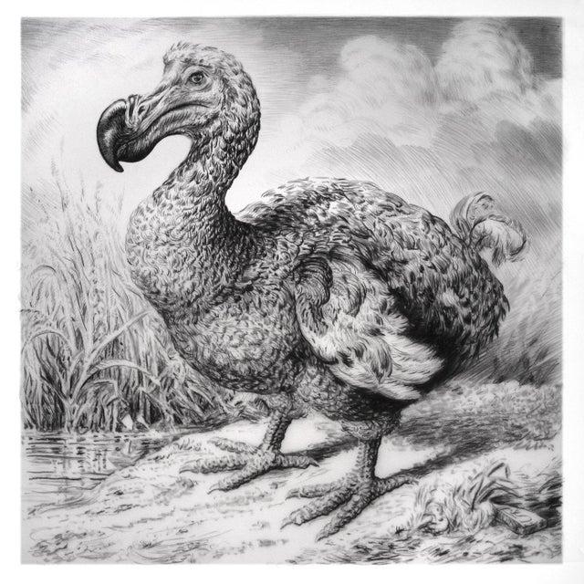 """Contemporary Contemporary """"Dodo I"""" Rick Shaefer Charcoal Print For Sale - Image 3 of 3"""