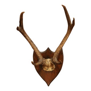 Large 19th Century French Mounted Deer Antlers and Skull on Carved Walnut Plaque For Sale