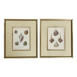 Framed Antique Sea Shell Engravings - a Pair For Sale