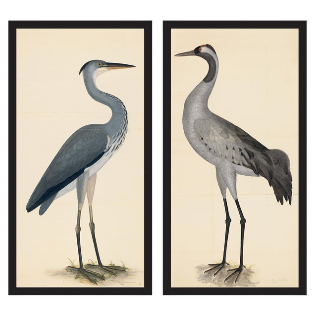 Blue Birds Prints With Roma Moulding - a Pair For Sale