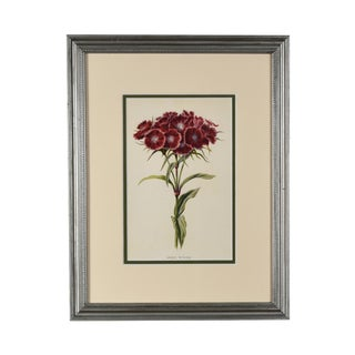 Late 19th Century Antique Original English Wild Flower Botanical Framed Print For Sale