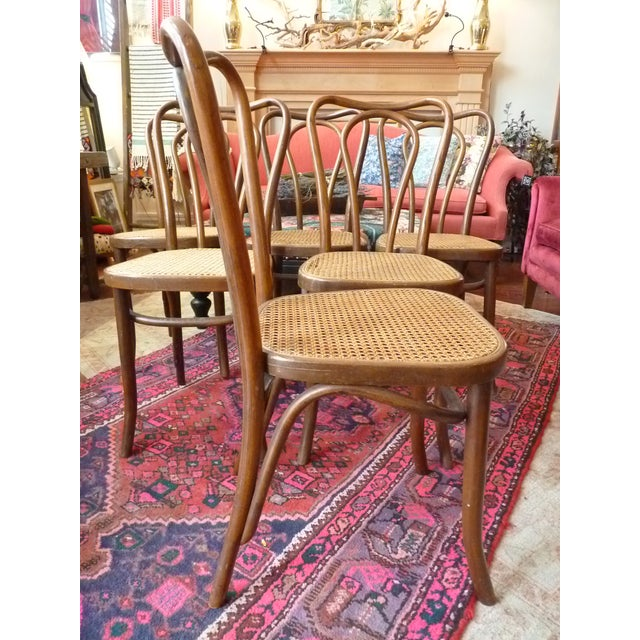 Caning Vintage Bentwood and Cane Cafe Dining Chairs - Set of 6 For Sale - Image 7 of 10