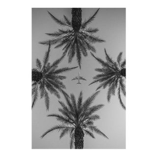 Jason Mageau Palm Springs Plane & Palm Trees Photo For Sale