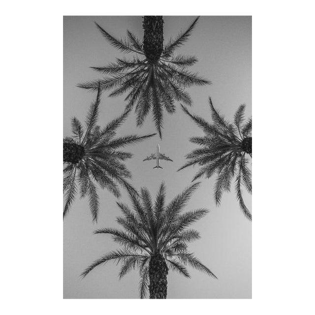 Jason Mageau Palm Springs Plane & Palm Trees Photo For Sale