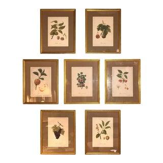 Set of Seven Botanical Prints of Fruit Signed Peter Drafet For Sale