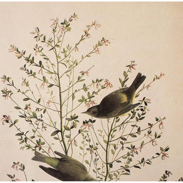 John James Audubon 1966 Cottage Print of Orange-Crowned Warbler by Audubon For Sale - Image 4 of 8