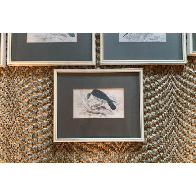 English Set of 6 1840's Bird Engravings - Framed For Sale - Image 3 of 11