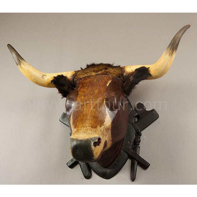 Black Forest Wooden Carved Bull Head From A Butchery Ca. 1880 For Sale - Image 3 of 5