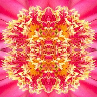 """""""Frazel Dazel 1"""" Floral Botanical Limited Edition Color Photography For Sale"""