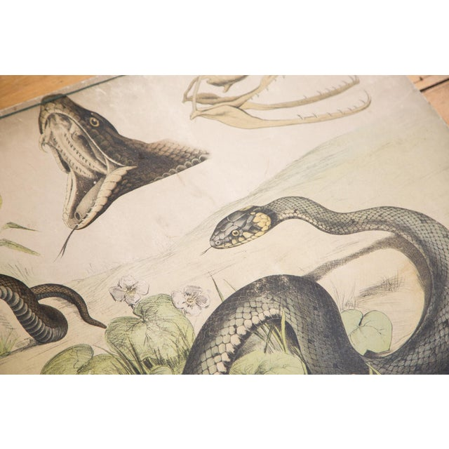 Vintage School Graphic Snakes Chart - Image 2 of 6