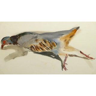 Vintage French Gouache - Game Bird Specimen For Sale