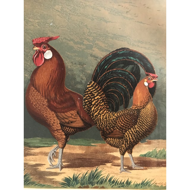 Chromolithograph from Cassell's Poultry book. Published in 1890.