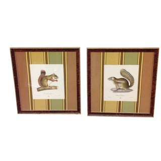 English Hand-Colored Lithographs of Squirrels in Custom Frame and Matte - A Pair For Sale
